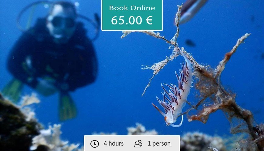 Discover Scuba Diving, Sithonia