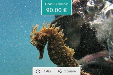 PADI Discover Local Diving Kassandra Halkidiki (certified diver)